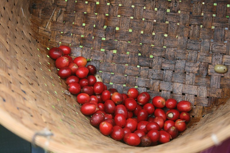 Kona coffee picking | © Foodista/Flickr