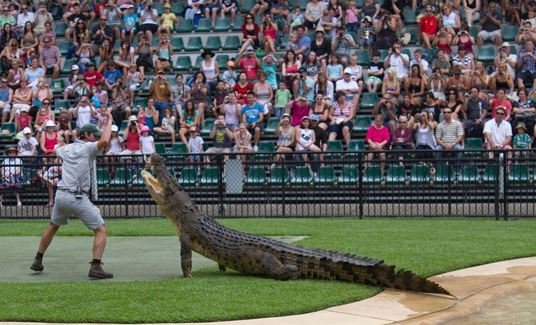 Crocodile feeding at Australia Zoo