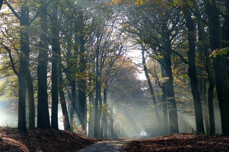 autumn-1984351_1920