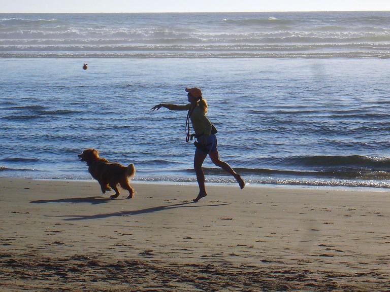 Dog_on_beach-6