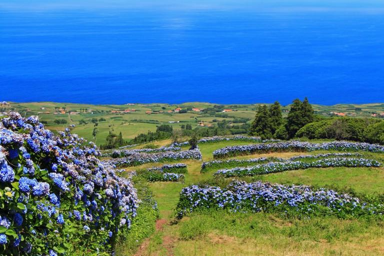 Faial Island, Azores