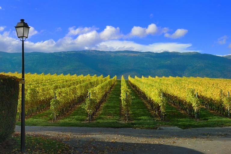 Swiss Vineyard and the Jura Mountains