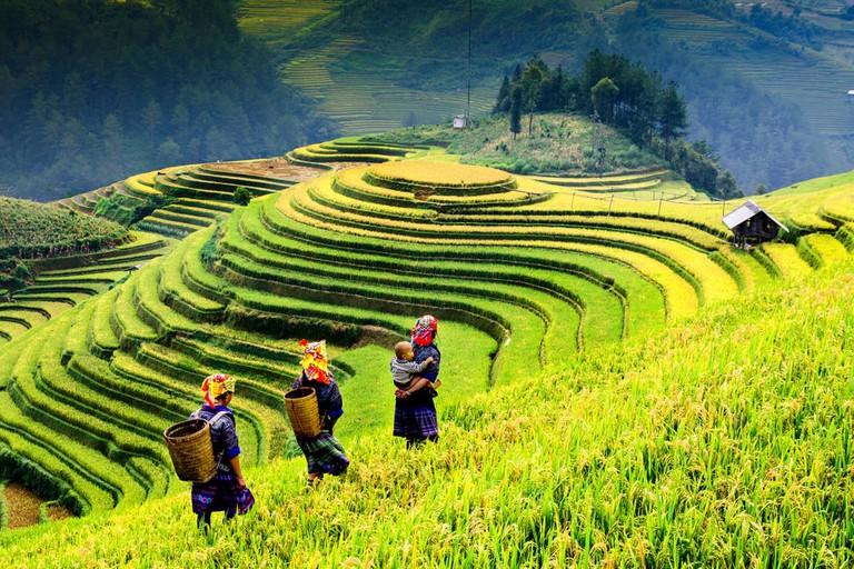 Terraced rice fields of Mu Cang Chai, YenBai, Vietnam