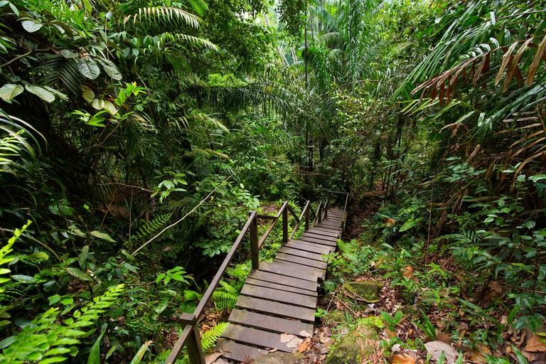 Borneo jungle, Bako National park, Malaysia