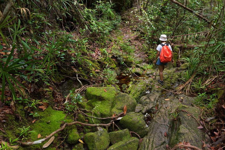 Trekking in the deep Borneo jungle of the Bako National park, Malaysia