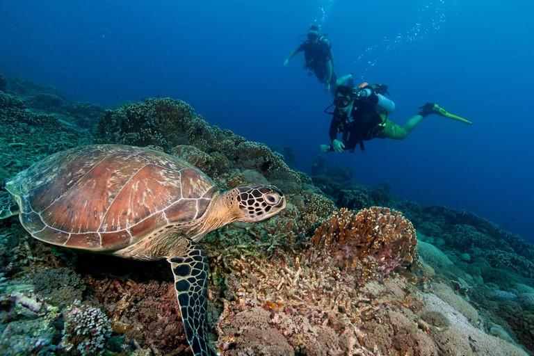 Sea turtle in the tropical ocean