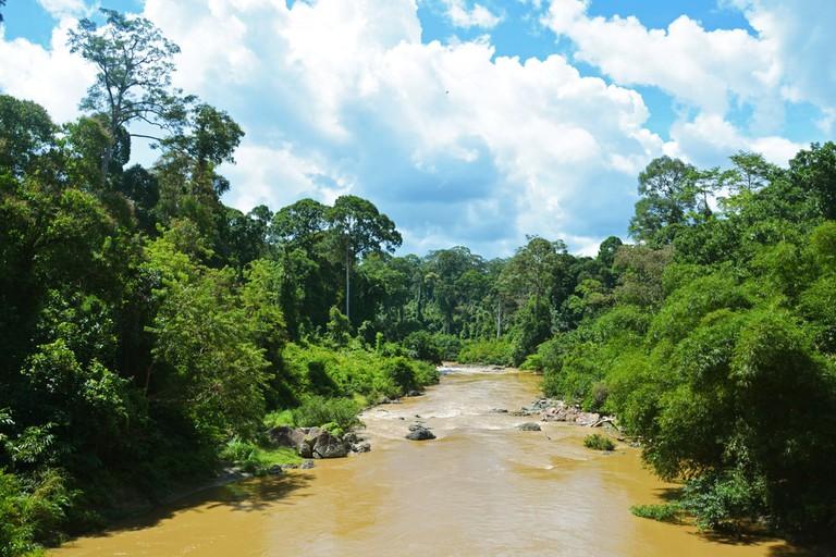 Danum Valley, Sabah, Borneo, Malaysia