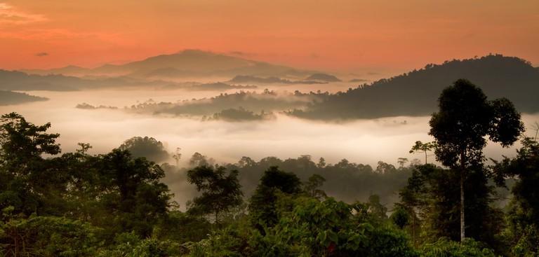 Danum Valley panorama sunrise, Sabah, Borneo
