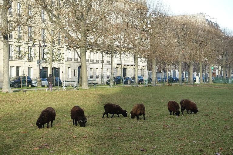 Sheep_@_Avenue_de_Breteuil_@_Paris_(30716370024)