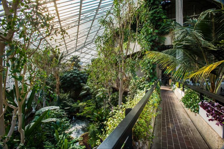 Barbican Conservatory 1