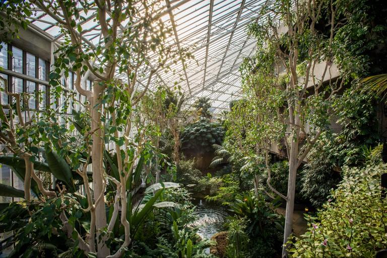 Barbican Conservatory 3