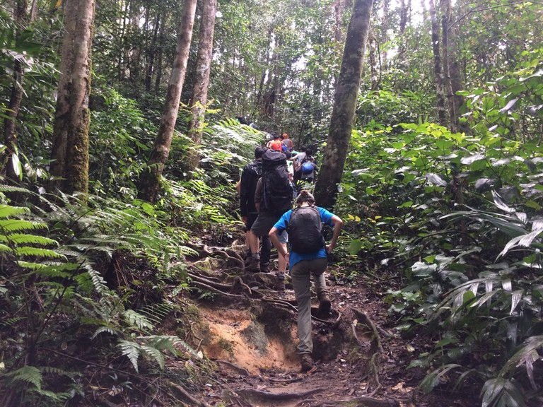 Group hiking in Cameron Highland, Pahang, Malaysia.