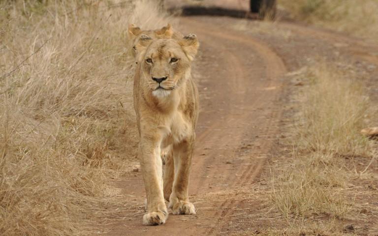 Hlane National Park safari