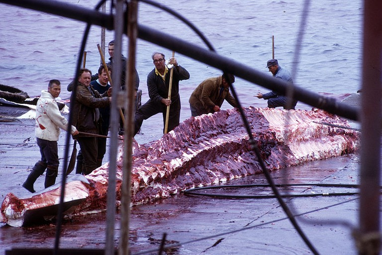 Whale_skinning_02
