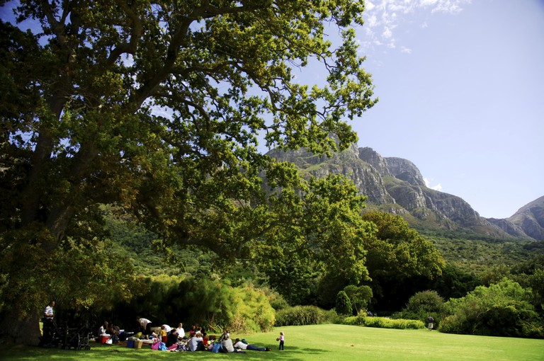 Sitting in the shade of a tree in Kirstenbosch National Botanical Gardens in Cape Town
