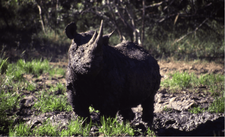 Reason to visit: spectacular birdlife and the rare rhinos ©Jenny Bowen
