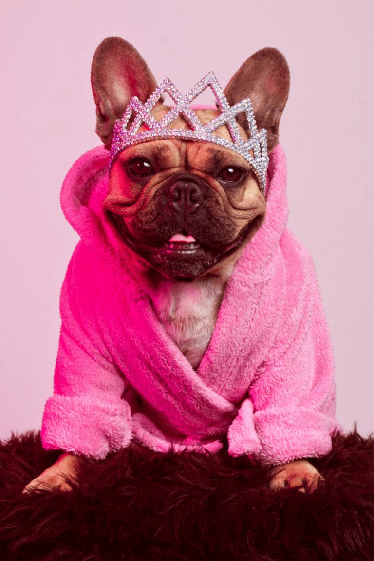 French Bulldog   Courtesy of Oliver Rath