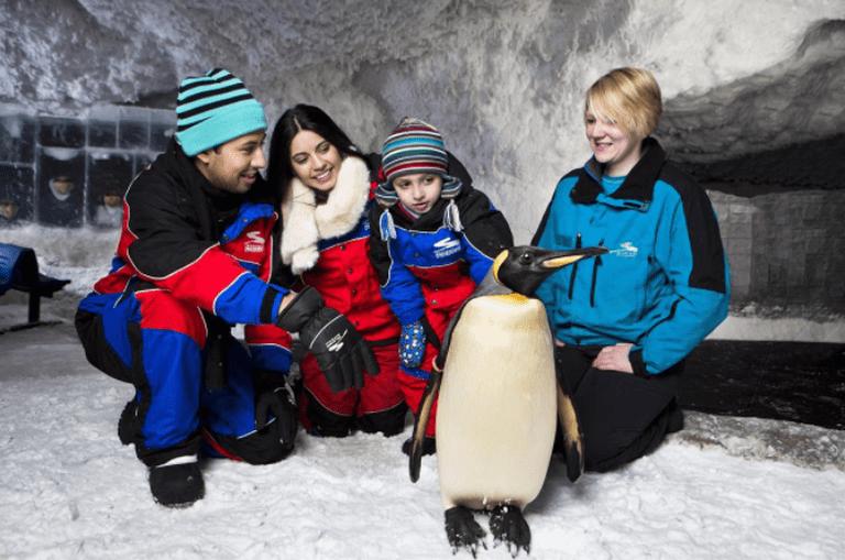 Ultimate Penguin Encounter at Ski Dubai