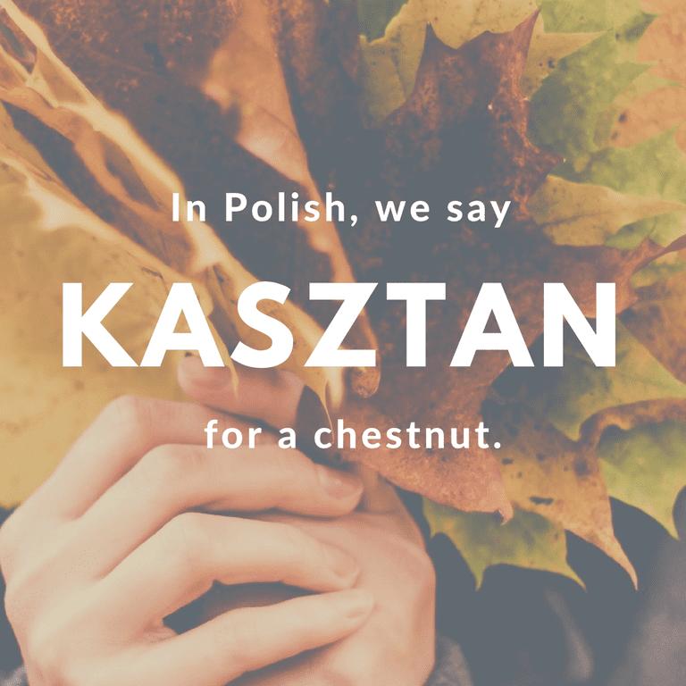 Kasztan-Chestnut © Culture Trip/Ewa Zubek