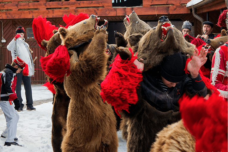 Up to 24 bears can dance at once   © Alex Dima
