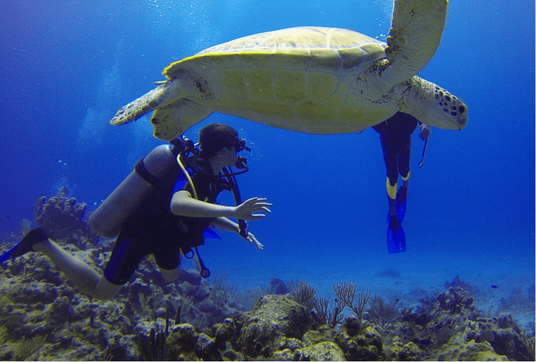 Diving with green turtles