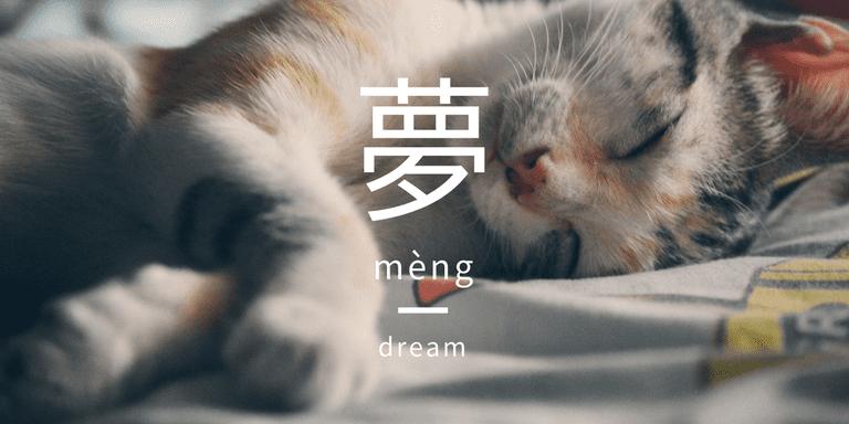 Sleeping kitten   Pexels