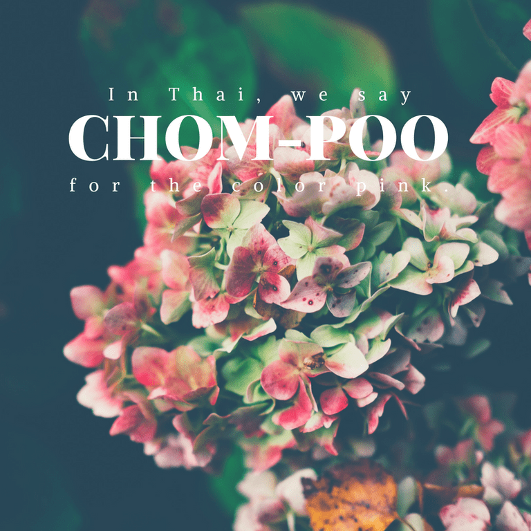 Chom-poo for the color pink