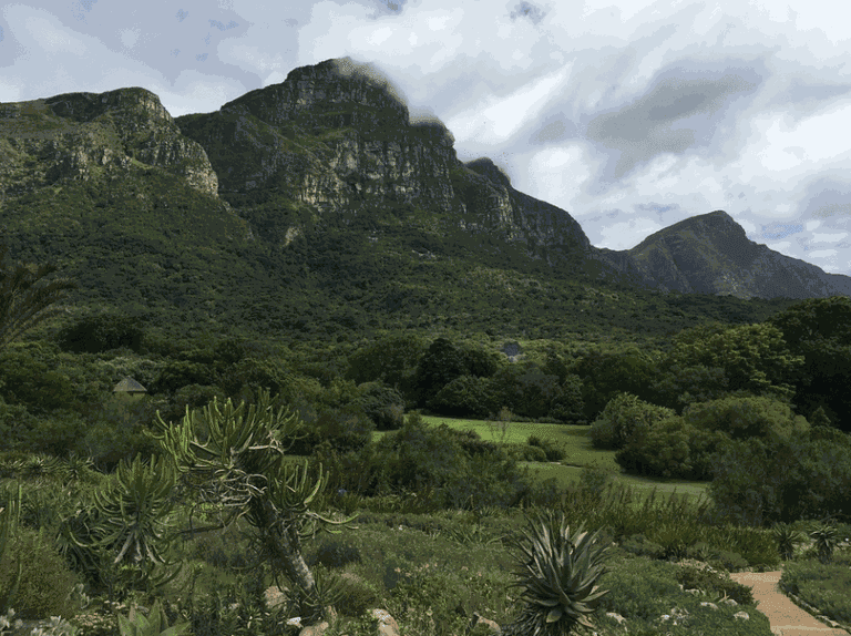 Kirstenbosch is particularly green during winter