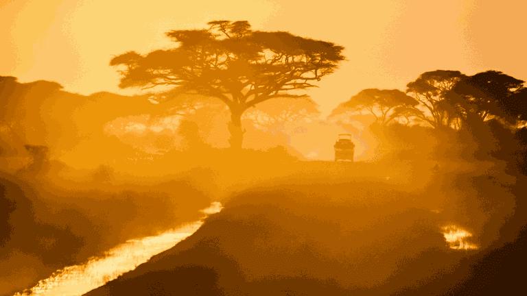 Stereotypes_safari