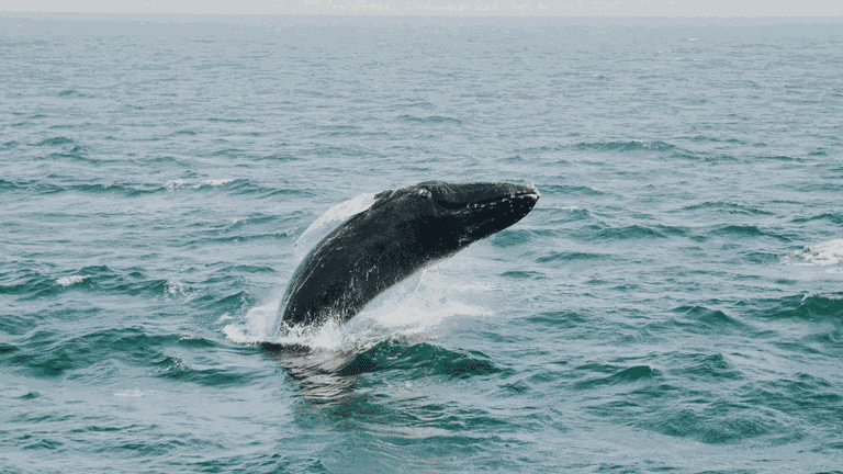 South Africa_whale-min