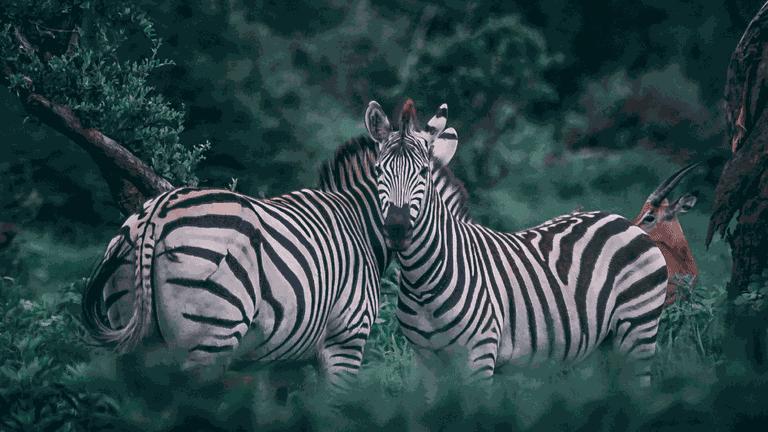 Africa_Botswana-min