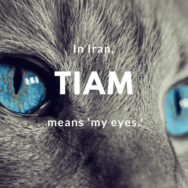 Tiam- my eyes | © cocoparisienne / Pixabay