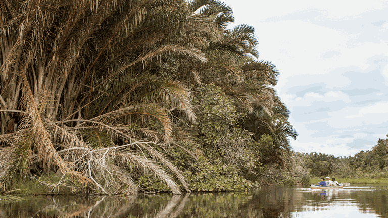 Kosi Bay_Guy Upfold_Kosi Forest Lodge raffia canoe-min