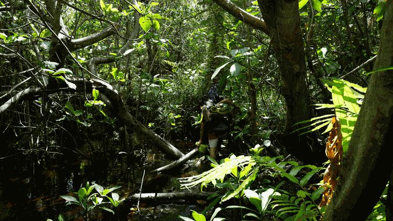 Kosi Bay_Swamp-min