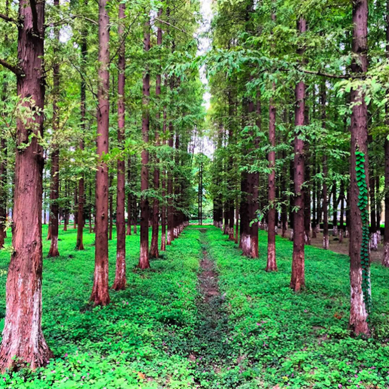 Forest inside a city
