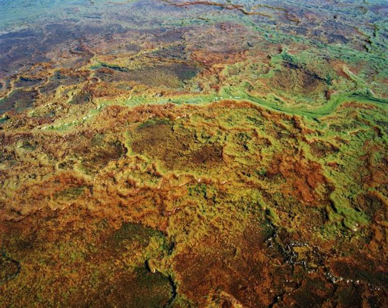Acid mine drainage, Blesbokspruit, Emalahleni (Witbank), Mpumalanga, 2011   © Ilan Godfrey