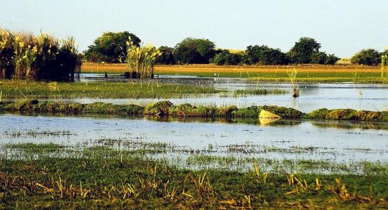 Swamps zambia