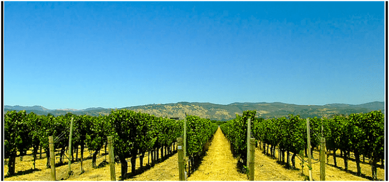 A Gourmet Guide to the Napa Valley | The 10 Best Restaurants