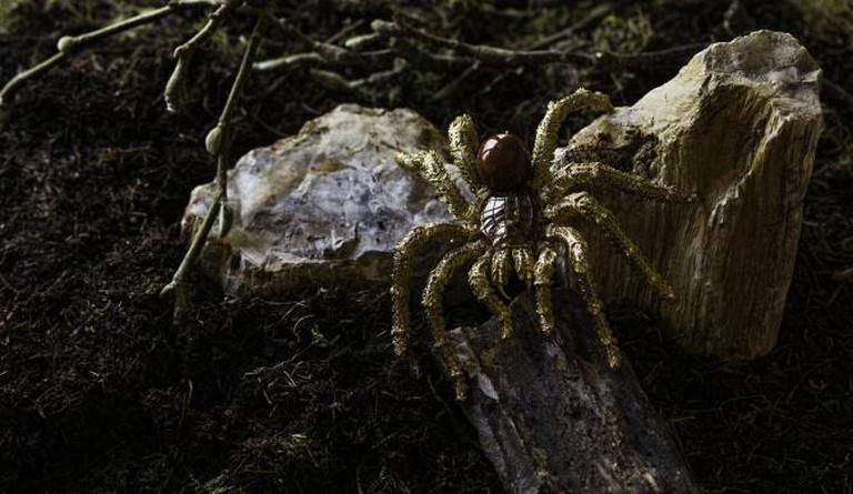 Hemmerle Tarantula Brooch