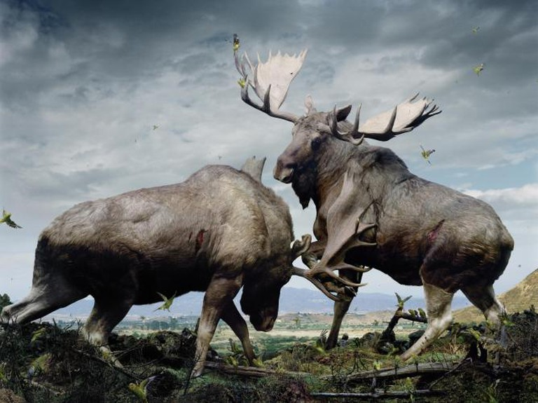 Simen Johan From the series Until the Kingdom Comes Untitled #133, 2005 Digital C-print © Simen Johan, Courtesy Yossi Milo Gallery, New York