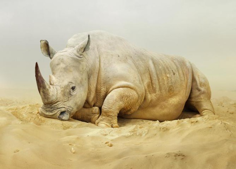 Rhino Simen Johan From the series Until the Kingdom Comes Untitled #168, 2011 Digital C-print