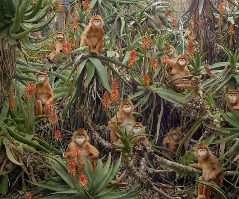 Simen Johan From the series Until the Kingdom Comes Untitled #174, 2013 Digital C-print © Simen Johan, Courtesy Yossi Milo Gallery, New York