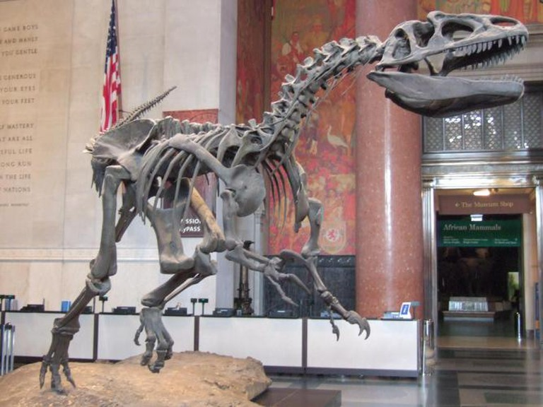 The Allosaurus skeleton from the AMNH entrance hall|© Jason R. Abdale