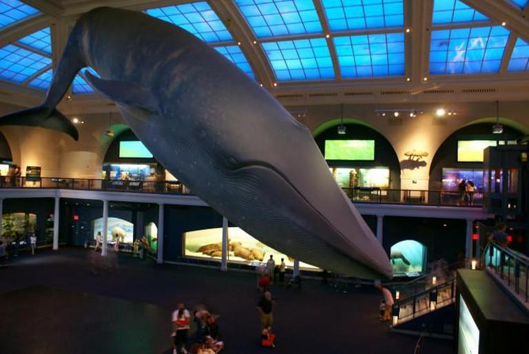 The Hall of Ocean Life|© Breakyunit/Wikimedia Commons