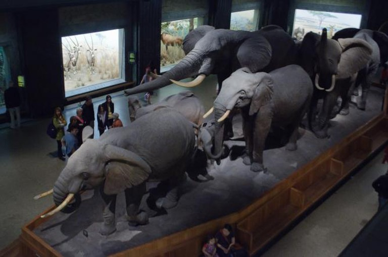 The Hall of African Mammals|© InSapphoWeTrust/Flickr