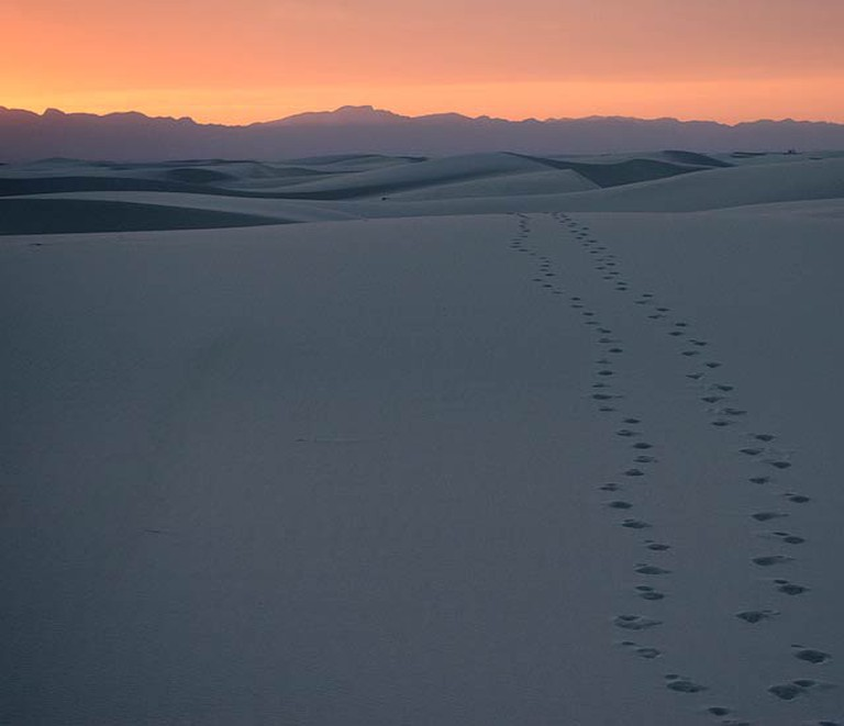 John Fowler, Tracks at White Sands- Creative Commons