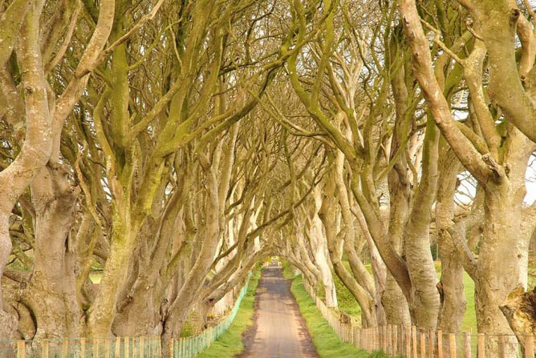 Dark Hedges, County Antrim, Northern Ireland