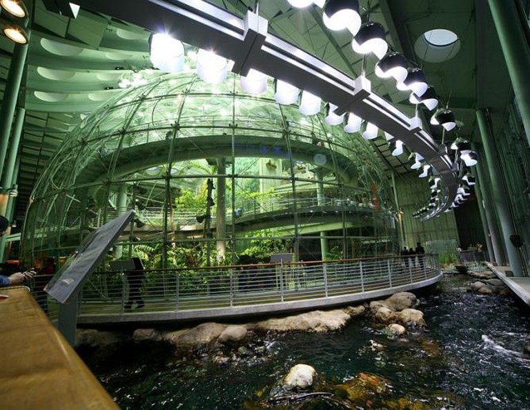 Rainforest exhibit inside the California Academy of Science | © Wikipedia Commons