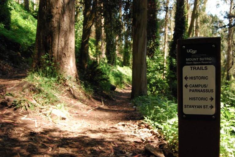 Mt. Sutro Trails