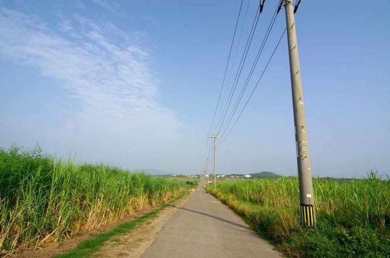 Sugarcane Road, Kohama Island | © Ken Funakoshi/Flickr